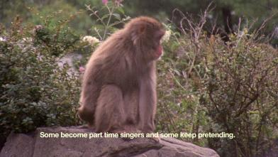The Everyday Ritual of Solitude Hatching Monkeys